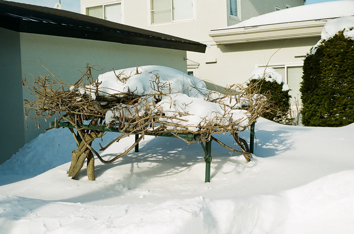 雪中の藤棚と亡弟の所感_c0182775_1771891.jpg