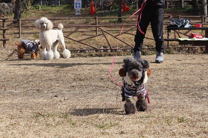 桃太郎公園キャンプ場。_b0111376_14121305.jpg