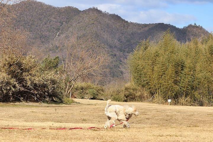桃太郎公園キャンプ場。_b0111376_14192851.jpg
