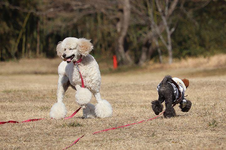桃太郎公園キャンプ場。_b0111376_14260171.jpg