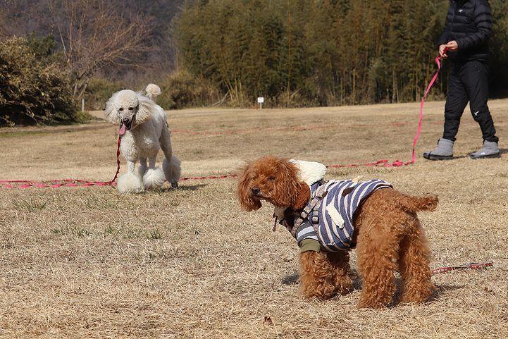 桃太郎公園キャンプ場。_b0111376_14270017.jpg
