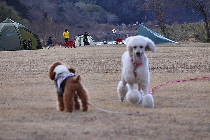 桃太郎公園キャンプ場。_b0111376_14282950.jpg