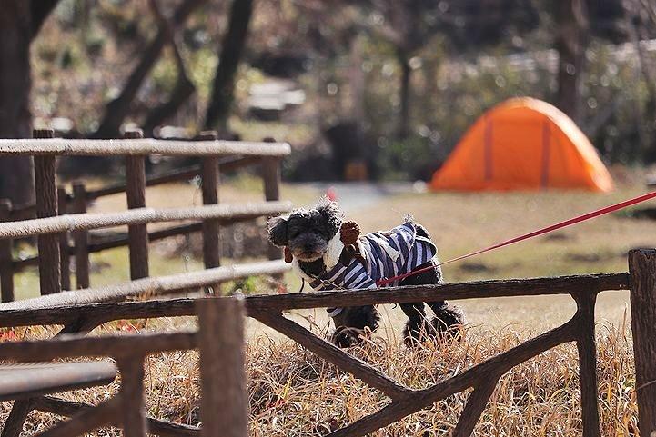 桃太郎公園キャンプ場。_b0111376_14334664.jpg
