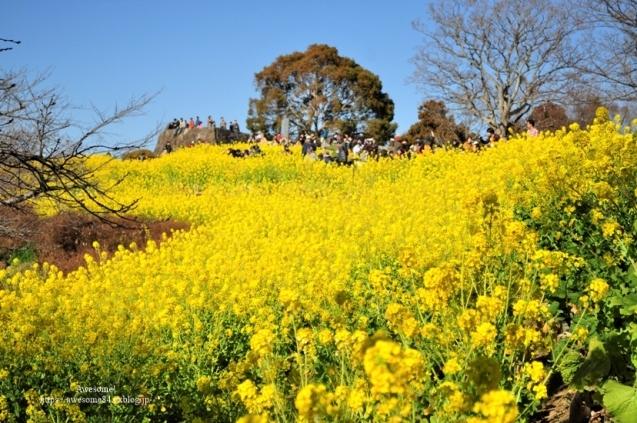 吾妻山公園 -vol.2-_e0359481_21275157.jpg