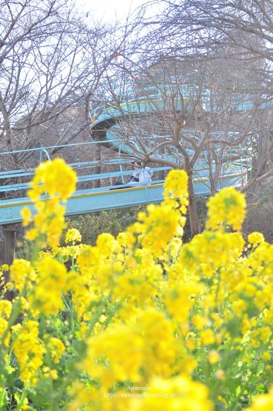吾妻山公園 -vol.2-_e0359481_22110010.jpg