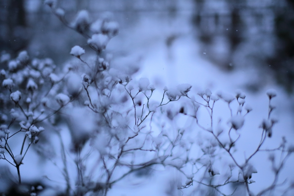 夕方から雪_f0091207_18233305.jpg