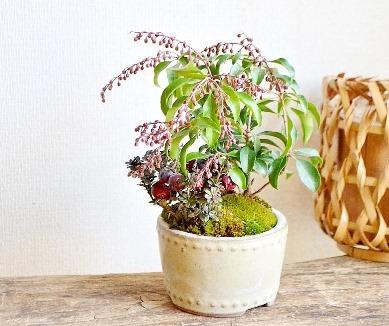 新春盆栽展ありがとうございました_d0263815_18190858.jpg