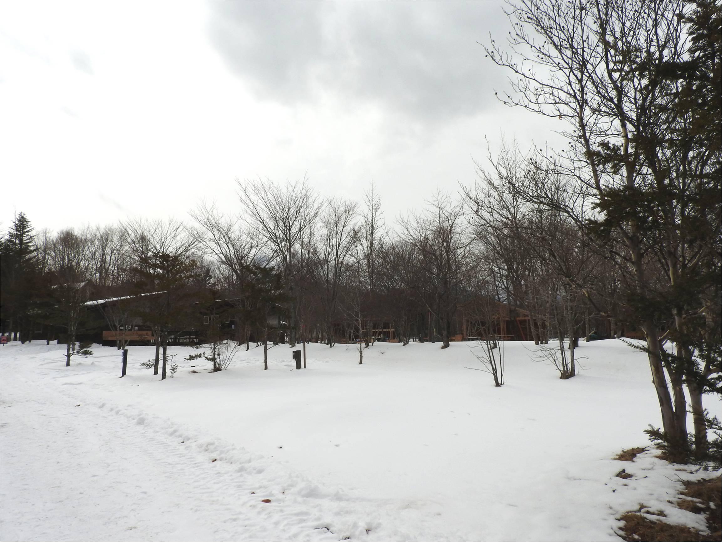 今週末の天気と気温(2019年1月31日)_b0174425_13142108.jpg
