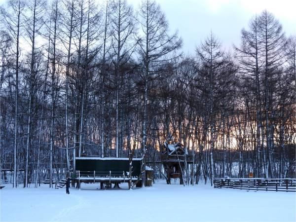 今週末の天気と気温(2019年1月31日)_b0174425_14323572.jpg