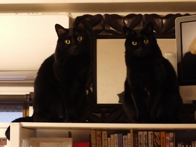 並んだ黒猫 ぎゃぉすてぃぁら編。_a0143140_23285561.jpg