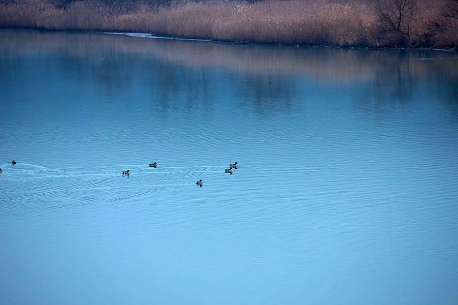 水鳥のいる風景_c0067040_23001705.jpg