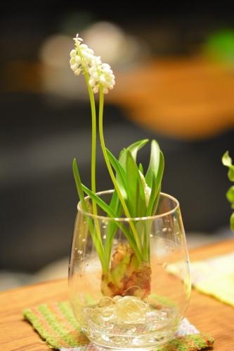 コップの中の小さな春♪_b0307951_23463347.jpg