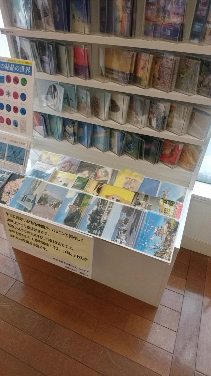 紀伊国屋書店札幌本店にセラピア絵はがきあります。北海道土産にいかが?_b0106766_13454919.jpg