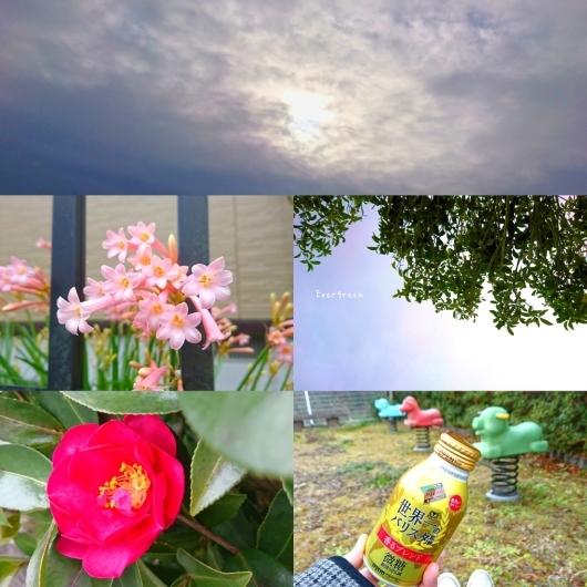 1/31(木)     今空さんぽに道草。_d0362666_10450200.jpg
