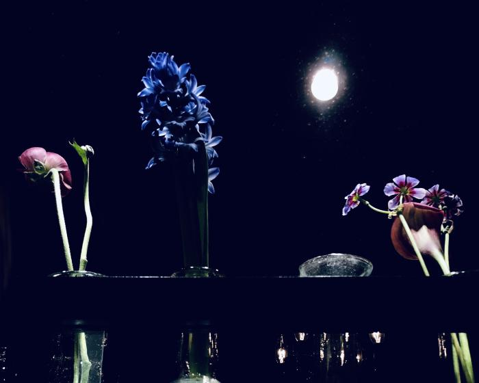 都会の花。_b0022268_19074251.jpg