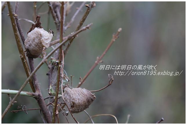 f0361079_20121266.jpg