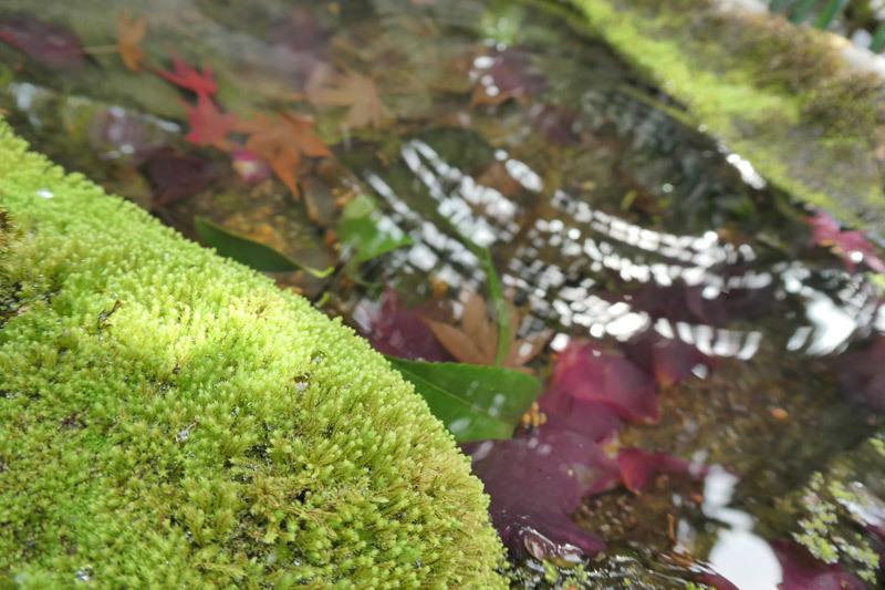 京都西山をうろちょろしてみた。_d0383596_22124359.jpg