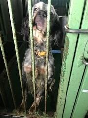 【犬・移動先募集】センター(支所)収容(1/26訪問)_f0242002_13350526.jpg