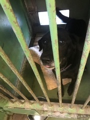 【犬・移動先募集】センター(支所)収容(1/26訪問)_f0242002_13351322.jpg