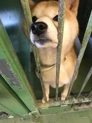 【犬・移動先募集】センター(支所)収容(1/26訪問)_f0242002_13351769.jpg