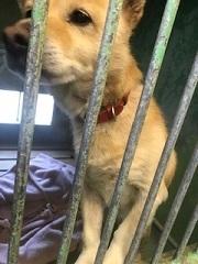 【犬・移動先募集】センター(支所)収容(1/26訪問)_f0242002_13353045.jpg