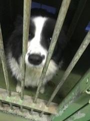 【犬・移動先募集】センター(支所)収容(1/26訪問)_f0242002_14130603.jpg