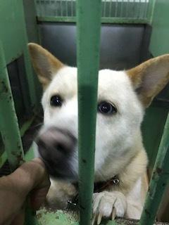 【犬・移動先募集】センター(支所)収容(1/26訪問)_f0242002_14210977.jpg