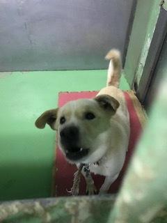 【犬・移動先募集】センター(支所)収容(1/26訪問)_f0242002_15314785.jpg