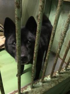 【犬・移動先募集】センター(支所)収容(1/26訪問)_f0242002_15315404.jpg