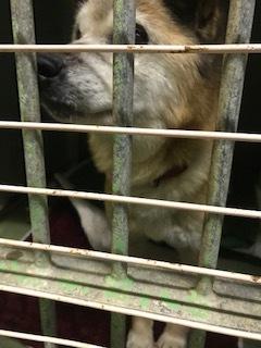 【犬・移動先募集】センター(支所)収容(1/26訪問)_f0242002_15511262.jpg