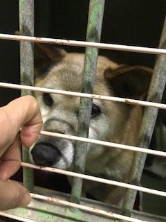 【犬・移動先募集】センター(支所)収容(1/26訪問)_f0242002_15512001.jpg