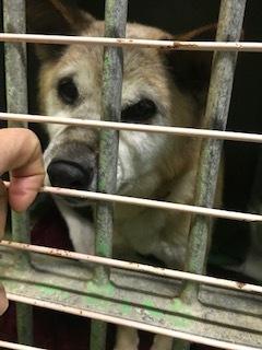 【犬・移動先募集】センター(支所)収容(1/26訪問)_f0242002_15513312.jpg
