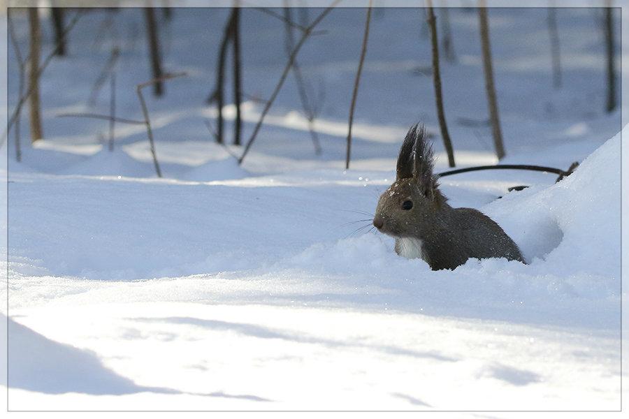 雪中ご馳走_e0235910_10112578.jpg