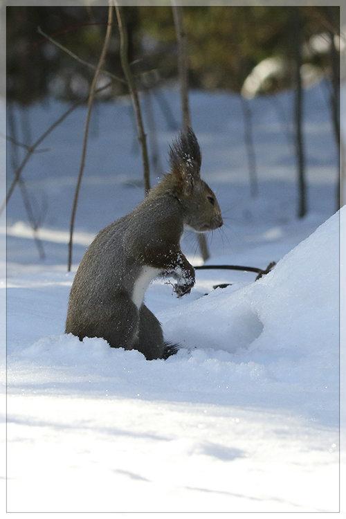 雪中ご馳走_e0235910_10123444.jpg