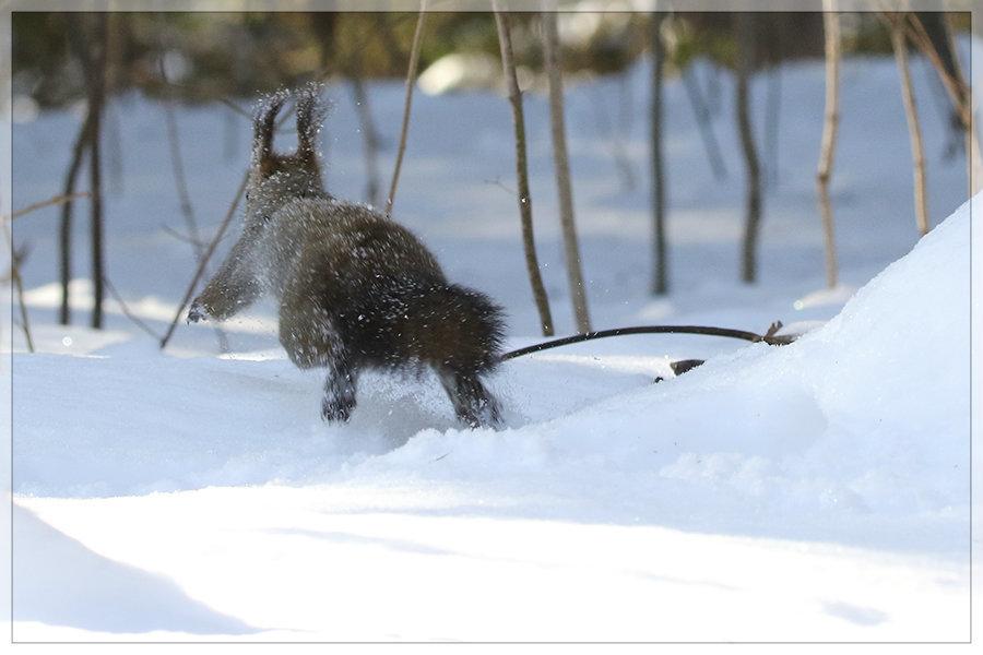 雪中ご馳走_e0235910_10141037.jpg