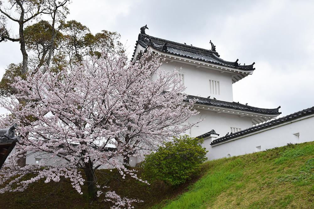 桜満開の赤穂城を歩く。 その1 「大手門~武家屋敷跡」_e0158128_14444645.jpg