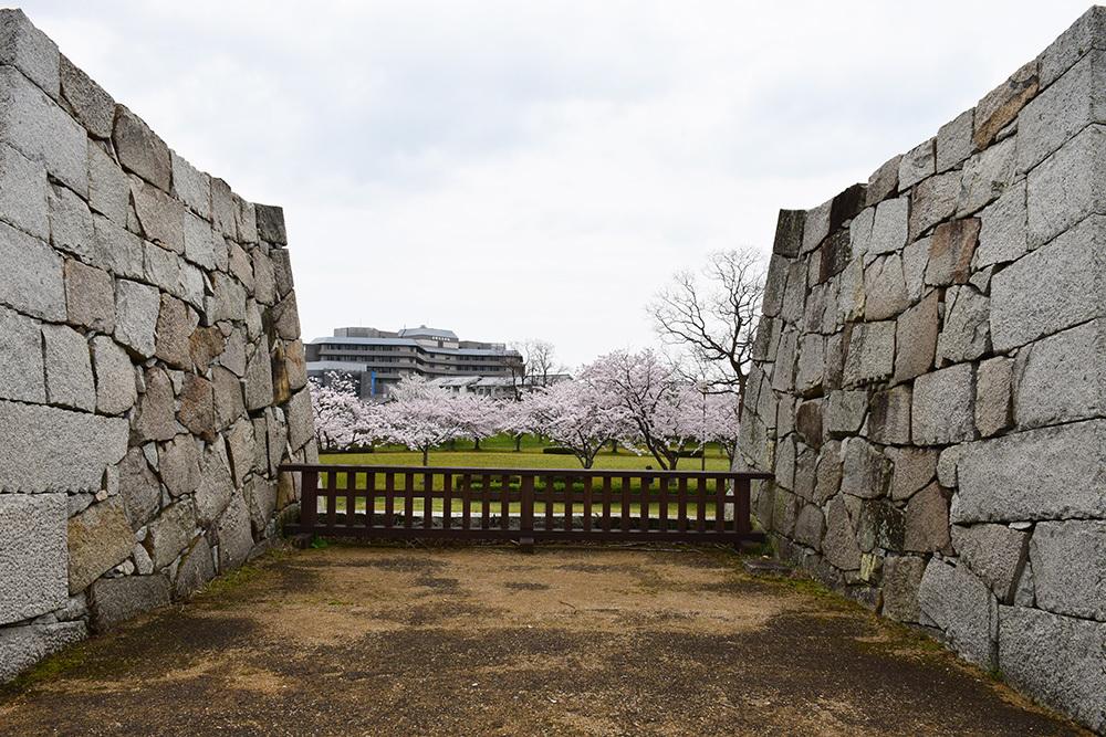 桜満開の赤穂城を歩く。 その3 「本丸」_e0158128_17321342.jpg