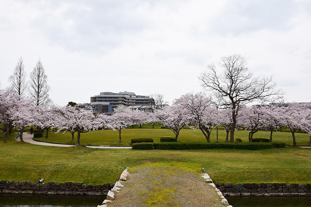 桜満開の赤穂城を歩く。 その3 「本丸」_e0158128_17321615.jpg