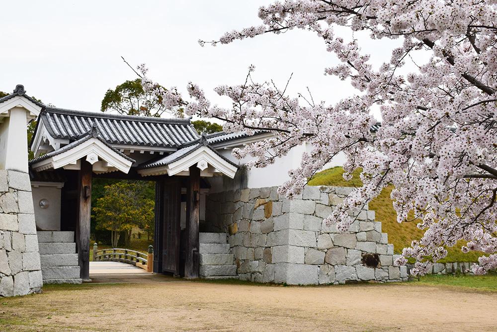 桜満開の赤穂城を歩く。 その4 「元禄桜苑」_e0158128_17403989.jpg