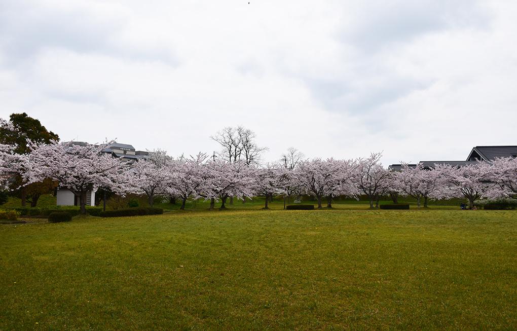 桜満開の赤穂城を歩く。 その4 「元禄桜苑」_e0158128_18141405.jpg