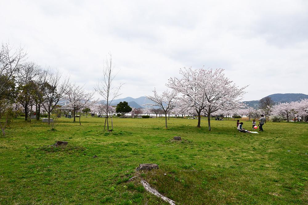 桜満開の赤穂城を歩く。 その4 「元禄桜苑」_e0158128_18142009.jpg