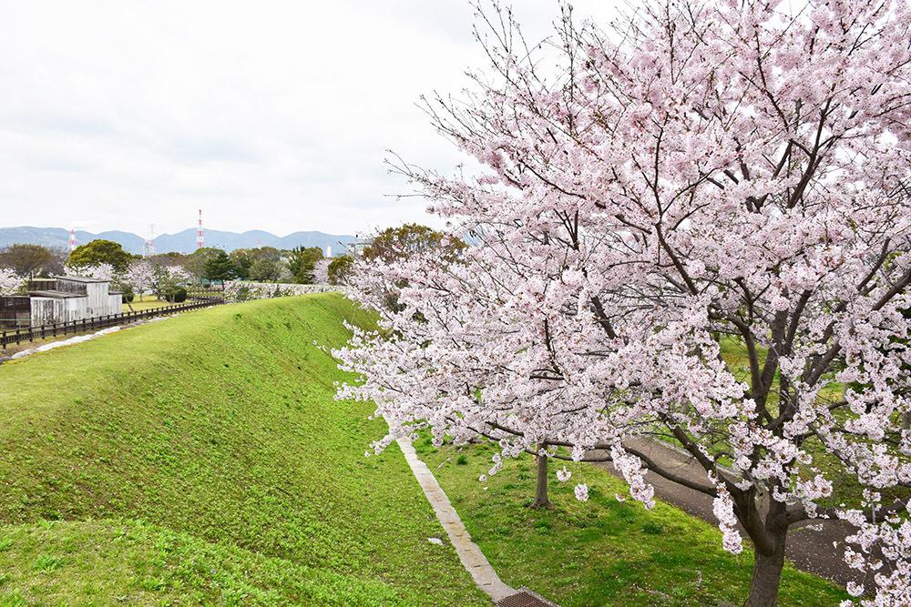 桜満開の赤穂城を歩く。 その4 「元禄桜苑」_e0158128_18212938.jpg