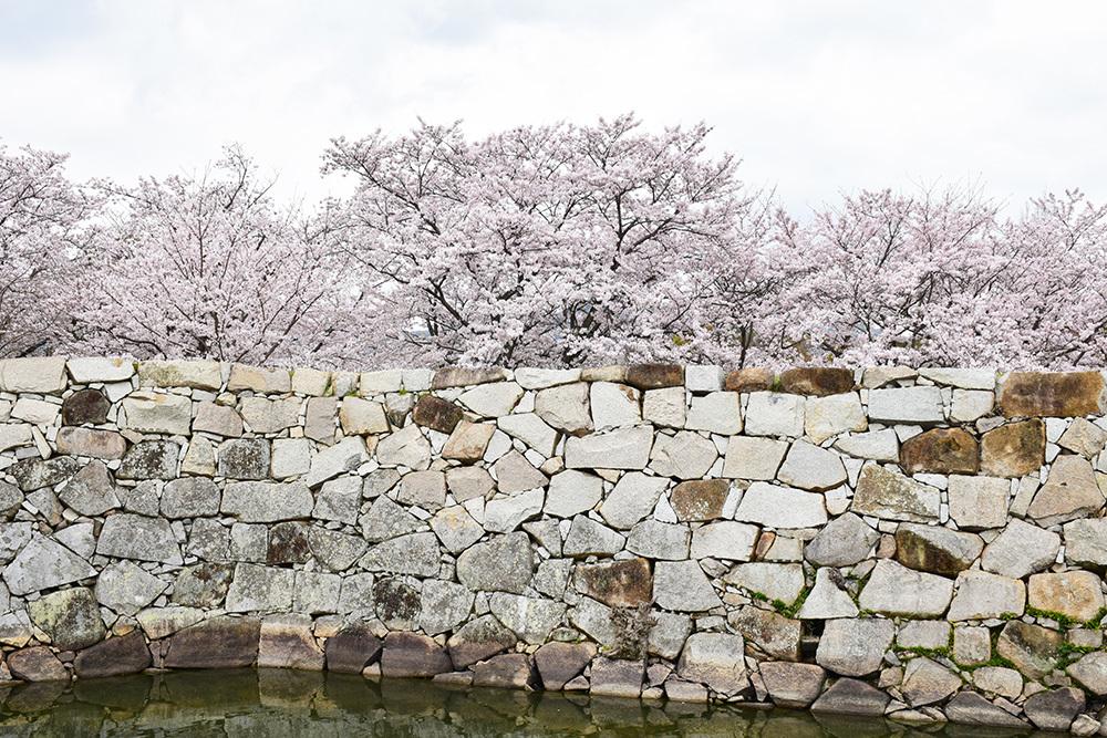 桜満開の赤穂城を歩く。 その5 「水手門、塩屋門」_e0158128_18444929.jpg