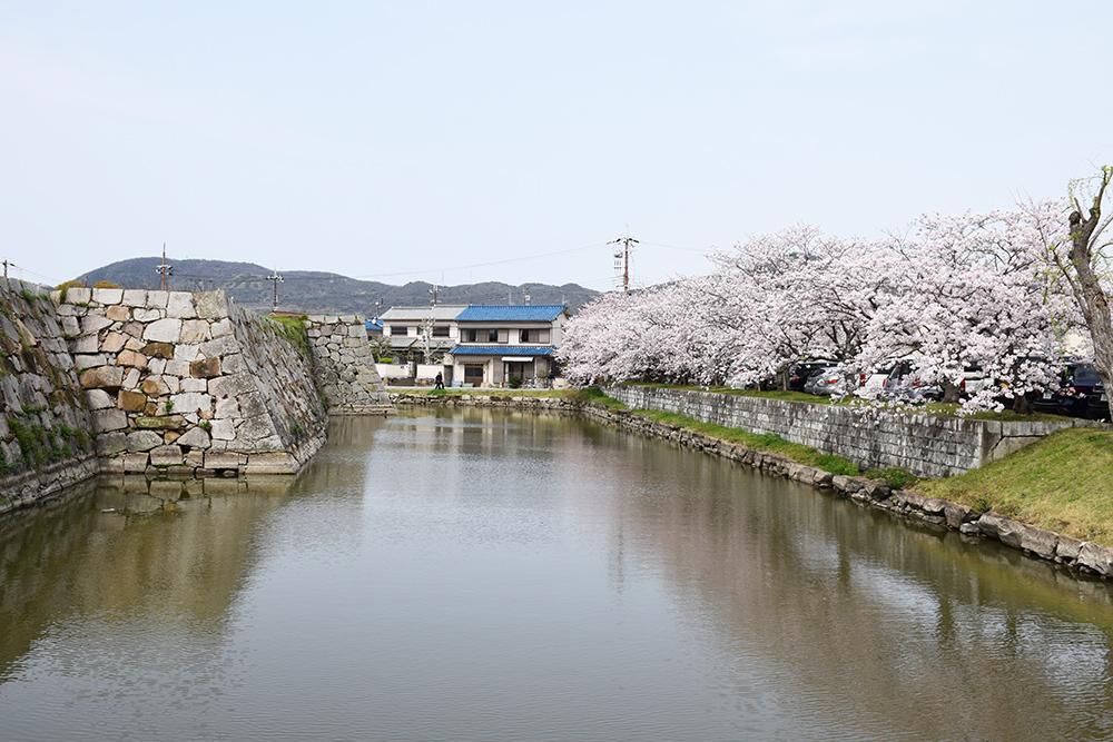 桜満開の赤穂城を歩く。 その5 「水手門、塩屋門」_e0158128_19252786.jpg