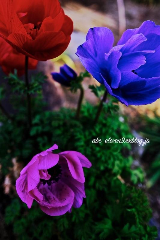 vivid color_f0315034_15551958.jpg