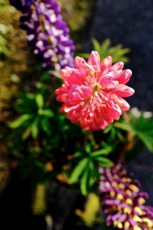 vivid color_f0315034_16050391.jpg