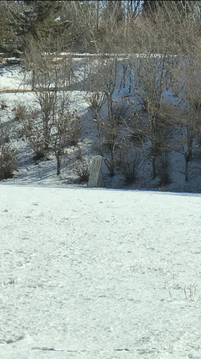 雪化粧の武甲山!!_f0194657_16522220.jpg