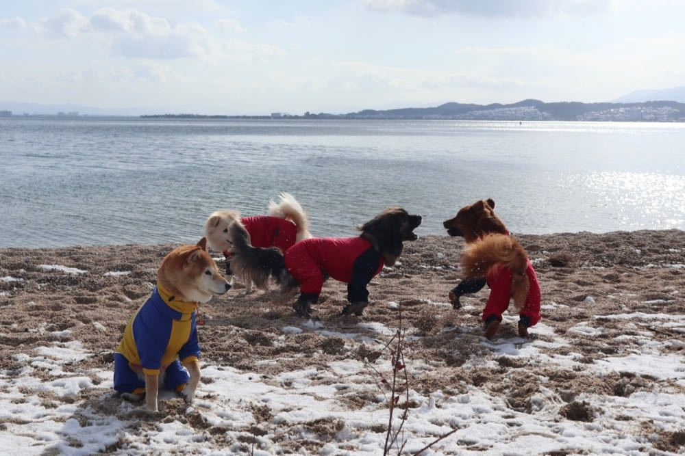 琵琶湖 with 小春小雪 〜小春編_a0119263_18033492.jpg