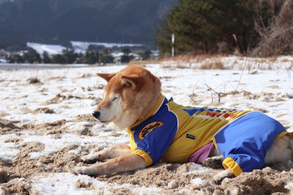 琵琶湖 with 小春小雪 〜小春編_a0119263_18181823.jpg