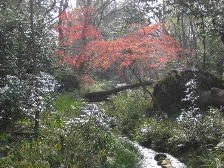 日本滞在 1 芦原温泉から京都へ_a0280569_195675.jpg